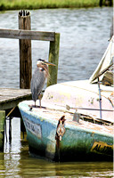 A Heron and an Old Boat