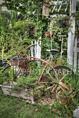 Another Old Bicycle in the Garden