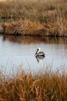 Pelican at the Wier I