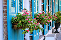 Pink Periwinkles and Turquoise Shutters