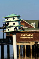 Purple Martins at the Fairhope Pier