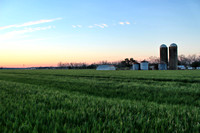 Baldwin County Wheat Field